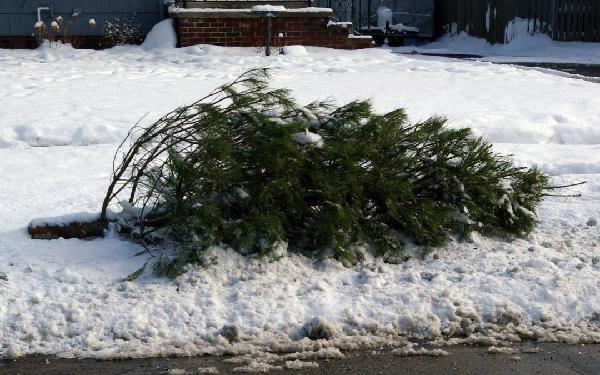 christmas-tree-recycling-f24e7a7db88d6fa4-1080x675