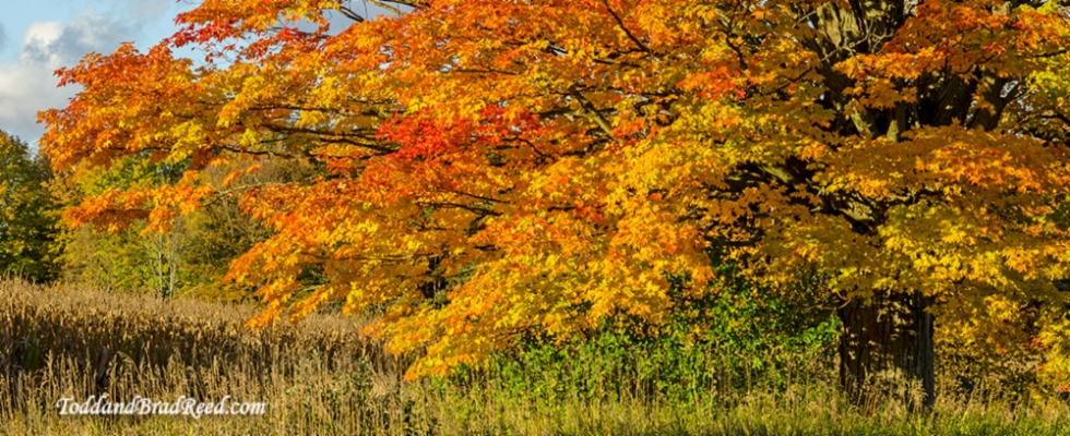 Brad Reed  Maple Glory PM River and Conrad Road October