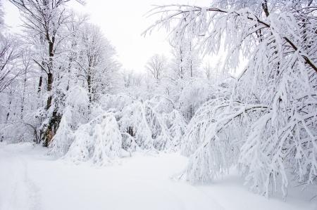 Bad Snow Storm