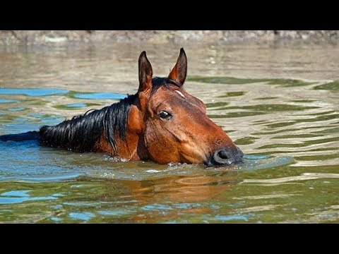 Horse in high water