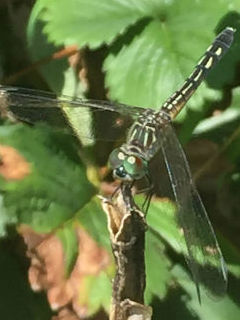 green dragonfly on plant