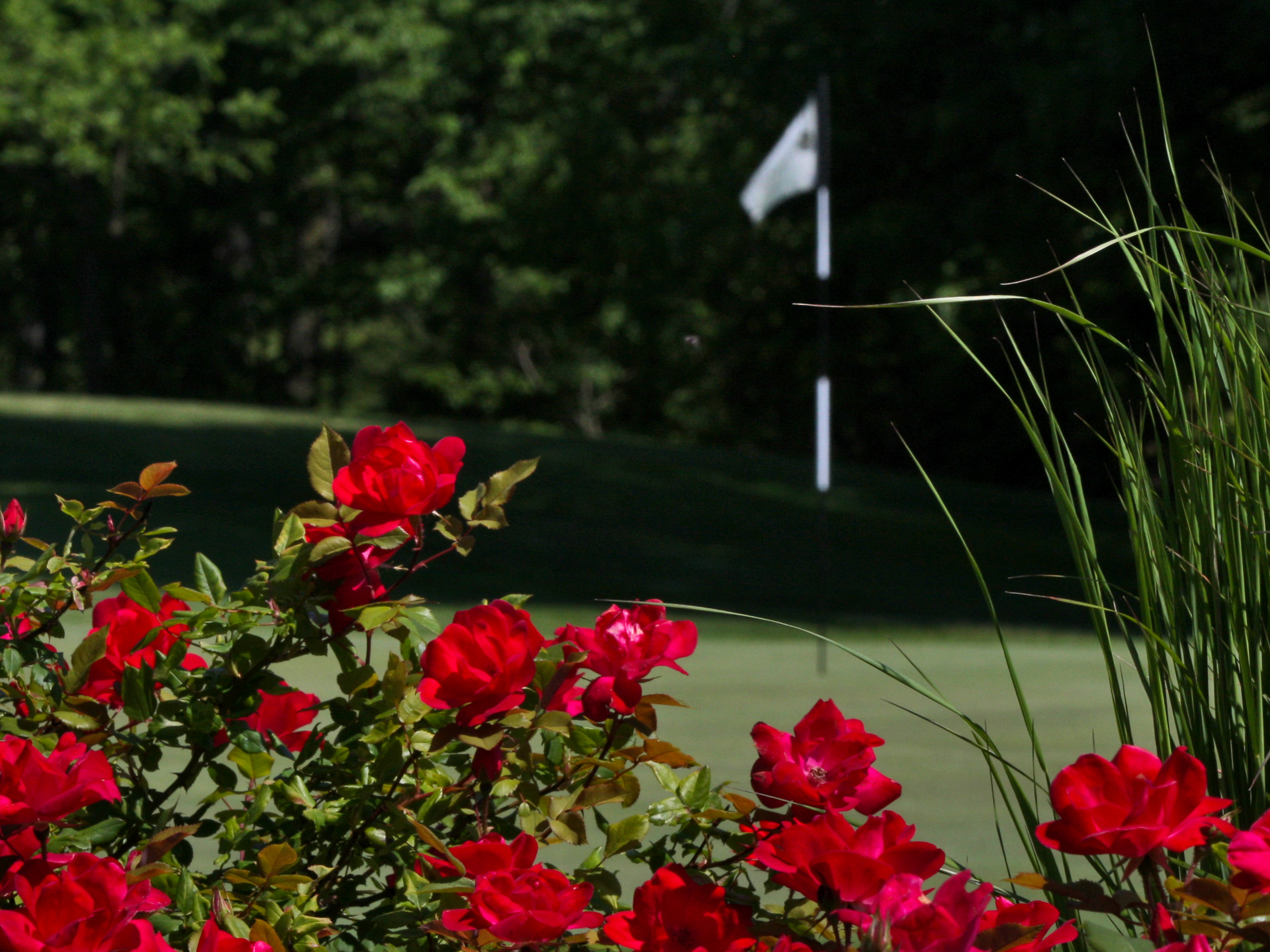 Flowers at the Blue Ash Golf Course
