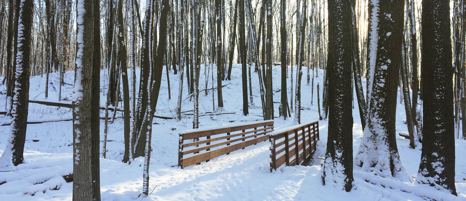 Winter - Lepard Preserve