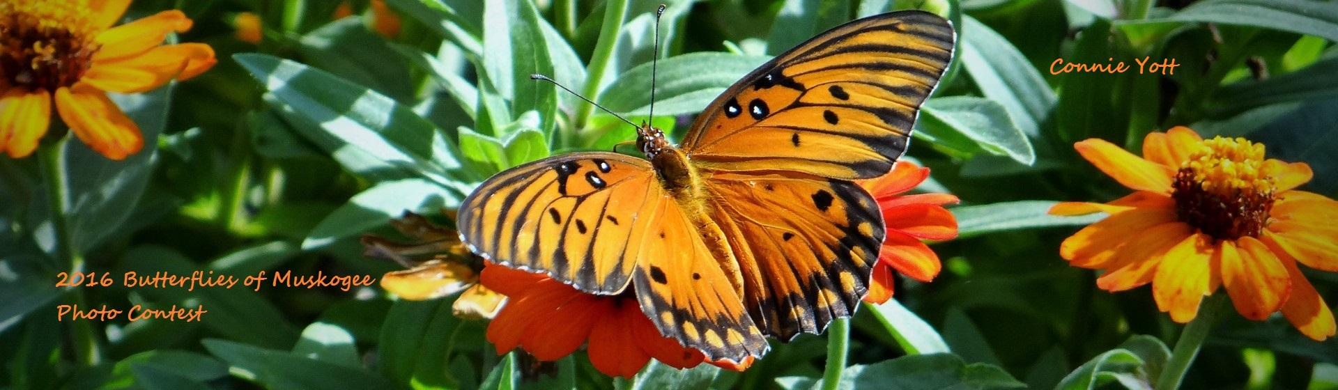 butterflycontest2016-16Web1
