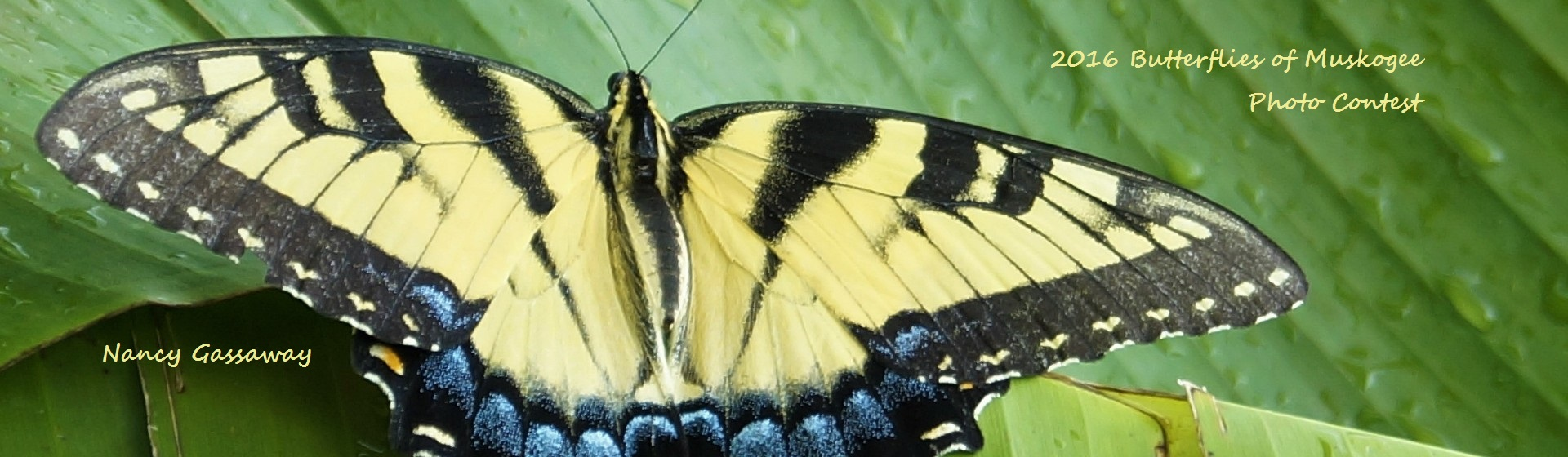 butterflycontest2016-18Web1