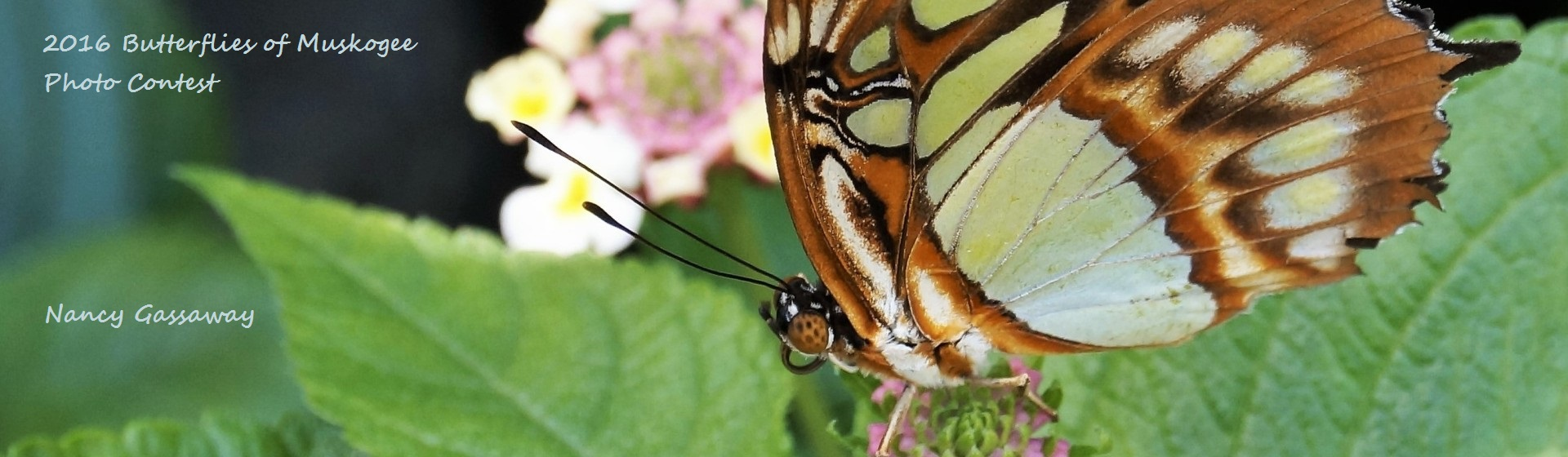 butterflycontest2016-19Web1