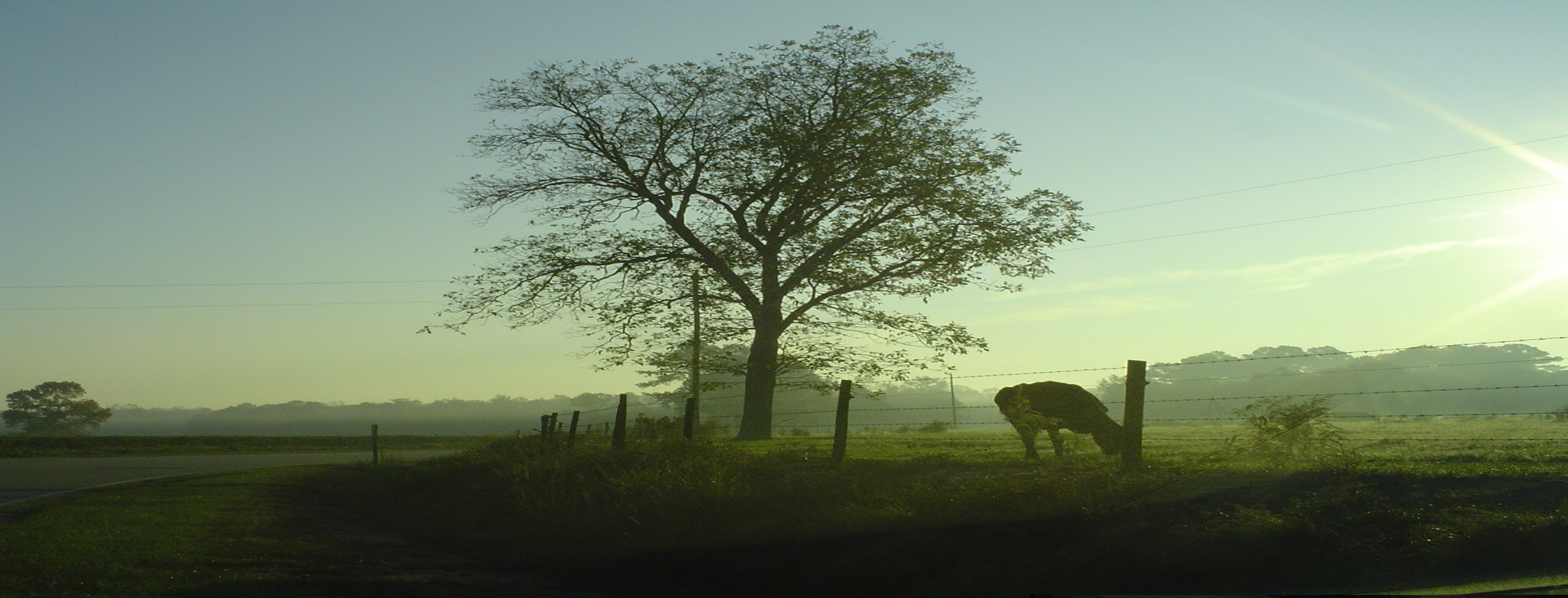 Early Morning, road, tree, and farm