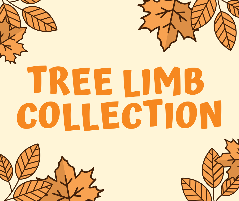 fall limb collection highlight