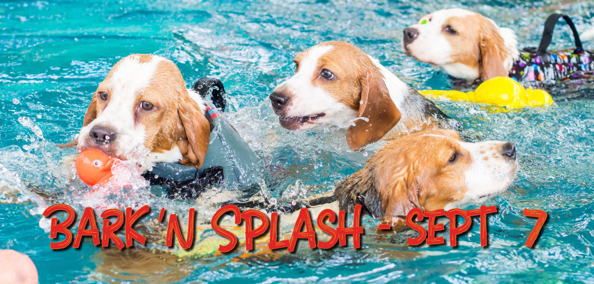 bark  n splash  banner